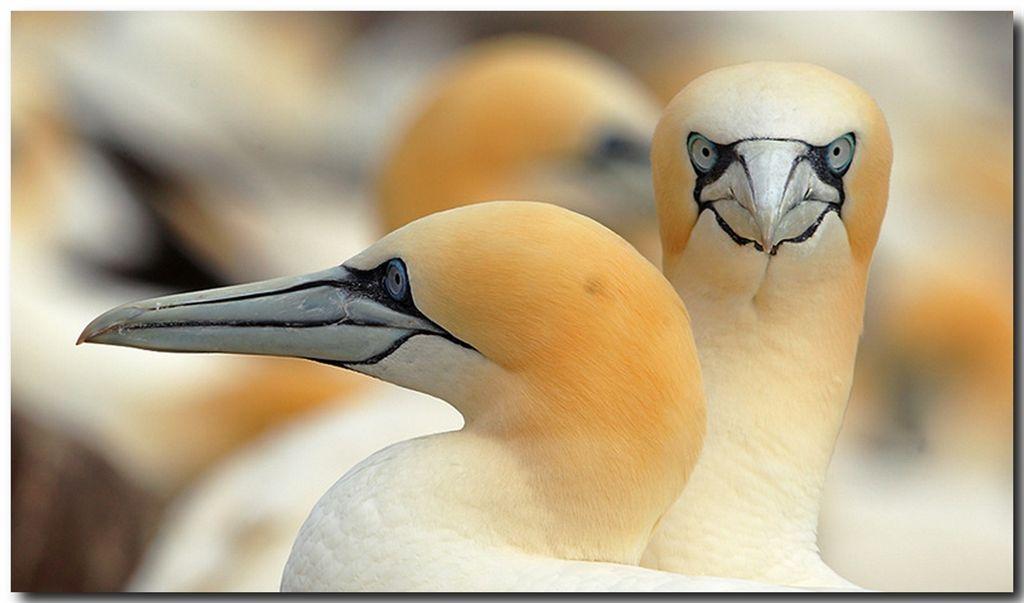 صور حيوانات و طيور
