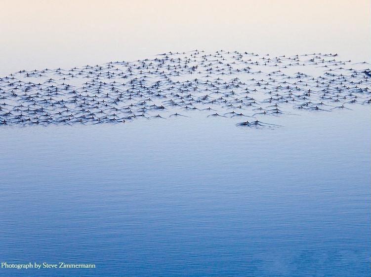 اجمل 30 صوره من ناشونا جيوجرافيك
