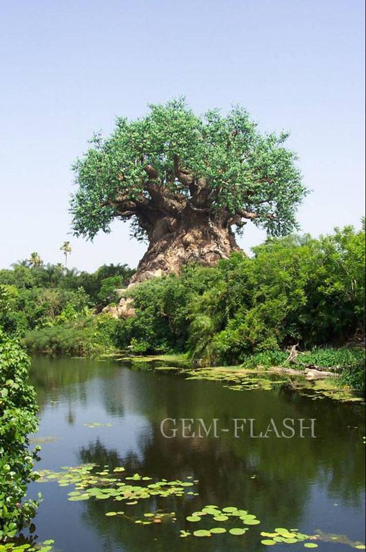 اغرب شجرة بالهند