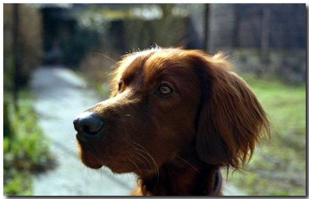 لمحبي صور كلاب