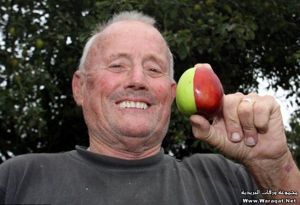 تفاحة نصفها أحمر والنصف الأخر أخضر