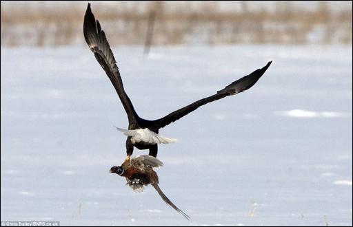 نسر يختطف طائراً من مصوِّر أثناء التقاط صور له