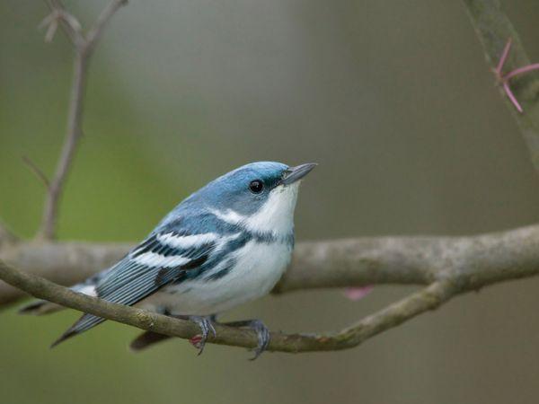 أجمل صور بلا منازع على الطيور