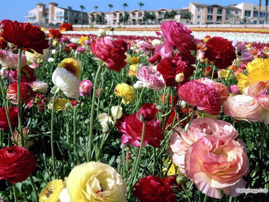 خلفيات زهور جميلة