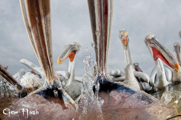 أفضل الصور لعام 2011 من إختيار ناشيونال جيوجرافيك