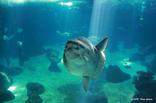 التصوير الفوتوغرافي تحت الماء  3