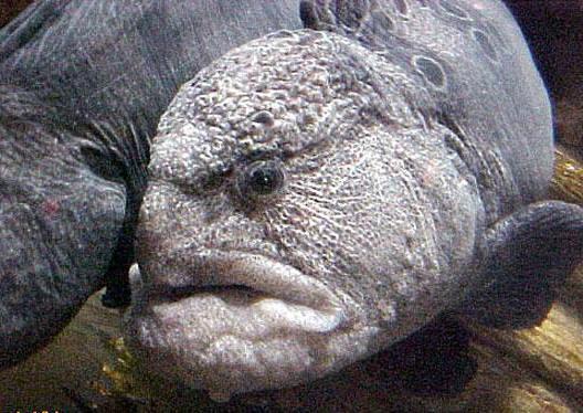 أغرب 12 سمكة في العالم سبحــان الخالق