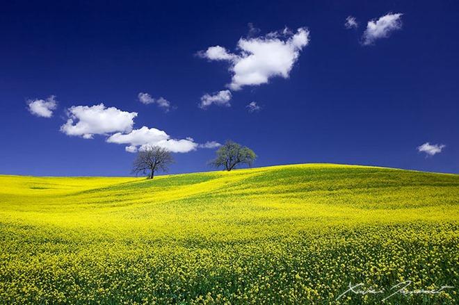 تصوير الطبيعة...