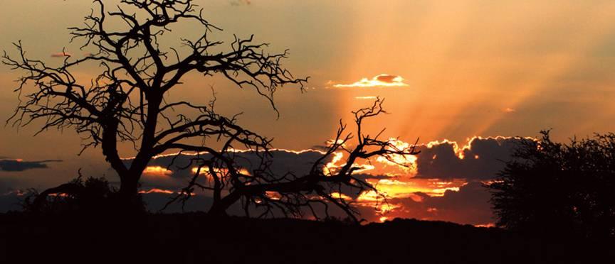 صحراء كالاهاري  جنوب أفريقيا