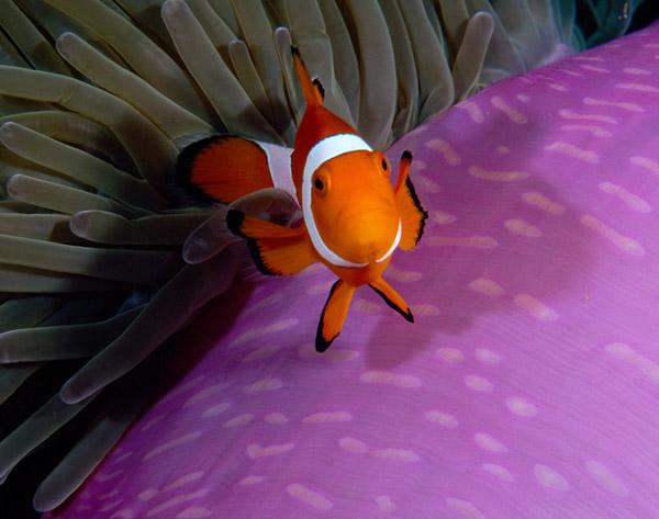 خلفيات مذهلة تحت الماء ( 2 )