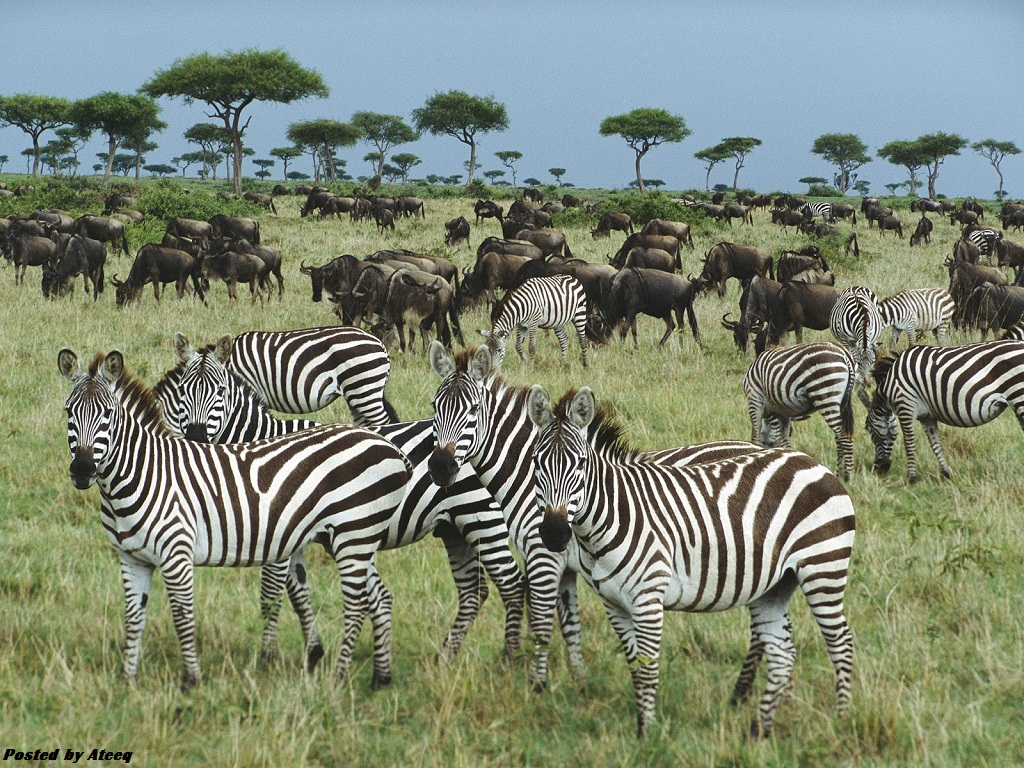 الحياة البرية في كينيا