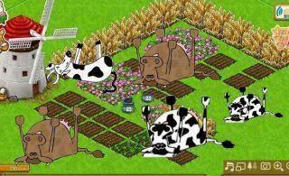 عاجل  من المزرعه السعيده