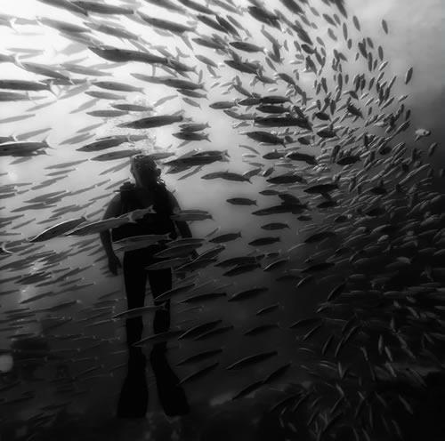 التصوير الفوتوغرافي تحت الماء  2