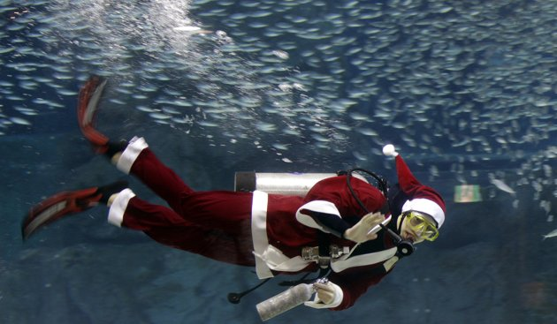 صور رائعة تحت الماء