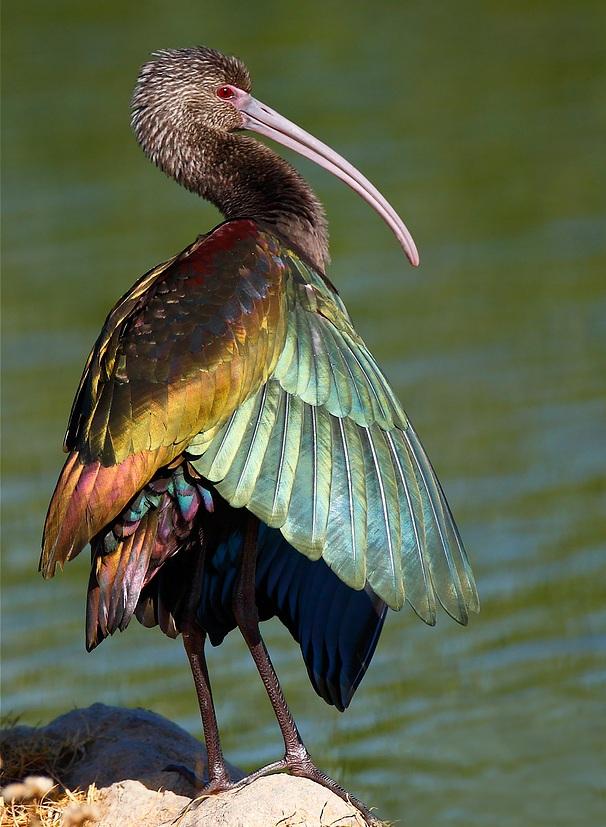 لون الطيور