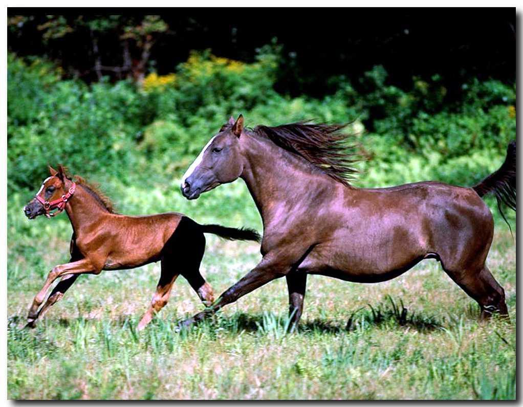 صور احصنة ( خيول )