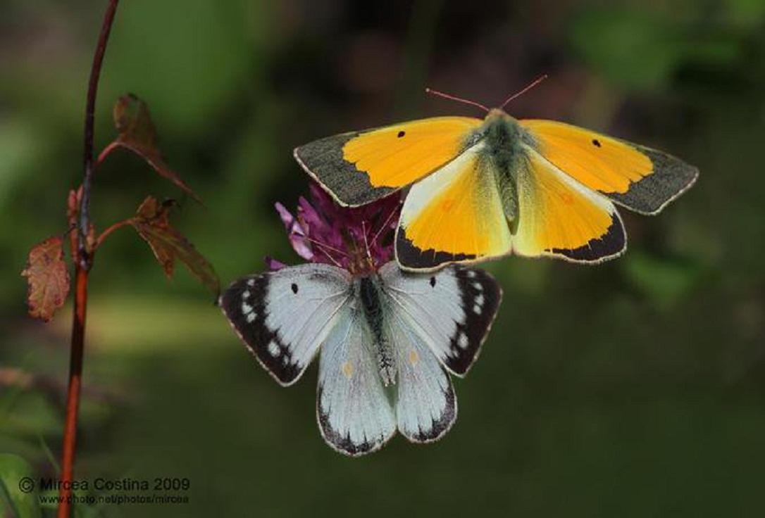 الفراشات  .. 2 ..