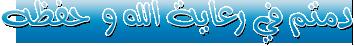 الفلاشة العربيه الكامله لهاتف x6 rm-559 فيرجن 40.0.002