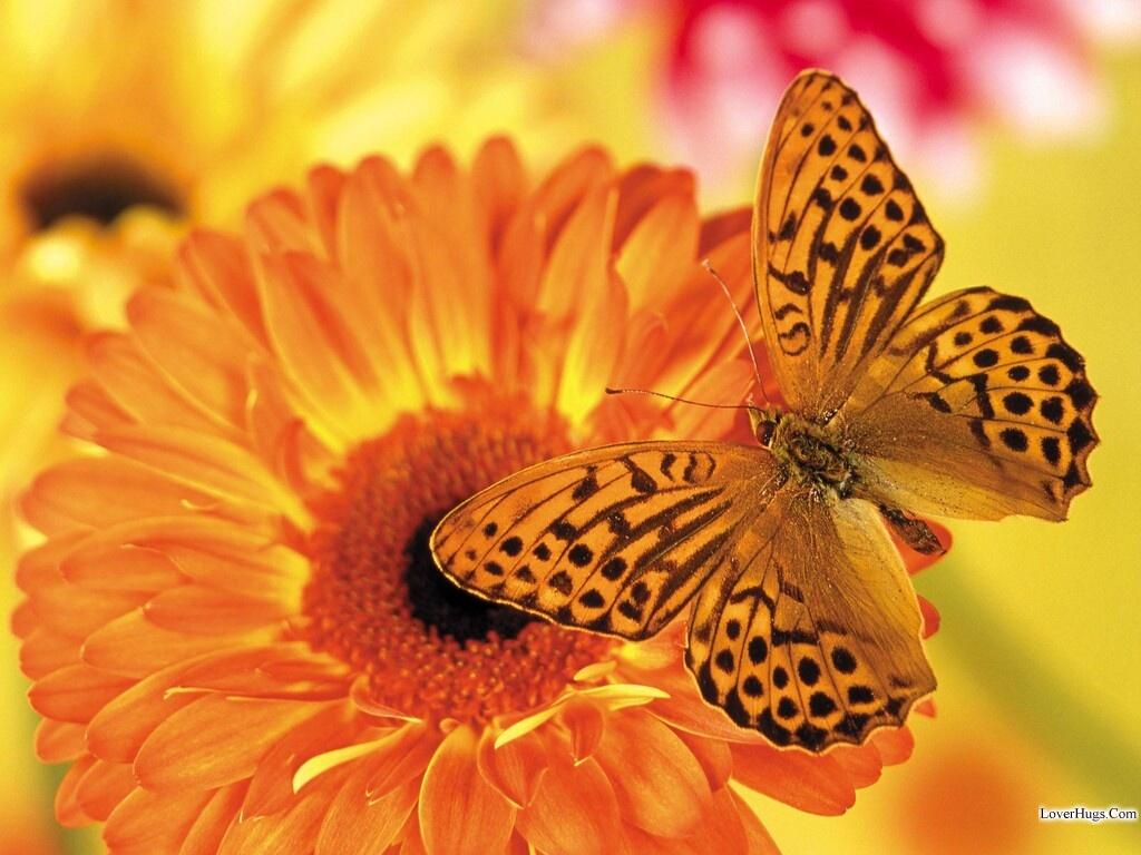 خلفيات الفراشات