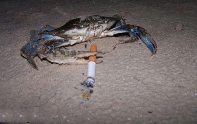 سرطان البحر يحب وحبيبته خانته